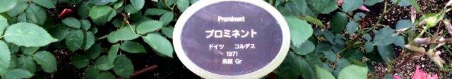 プロミネント